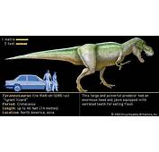 Facts About The Tyrannosaurus Rex