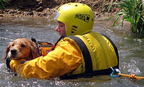 image gallery rescue animals