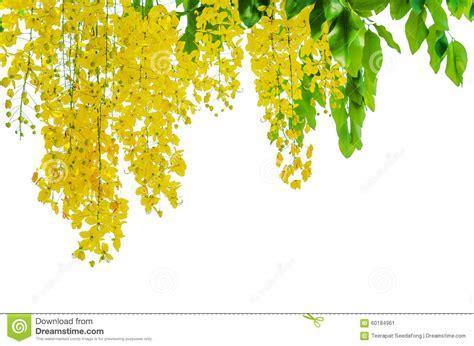 doccia dorata doccia dorata su fondo bianco immagine stock immagine di