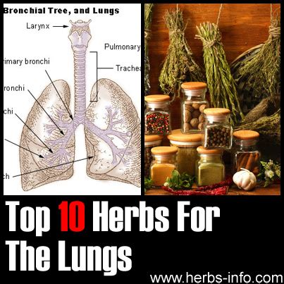 Herbs Detox Lungs by Herbs For Lungs