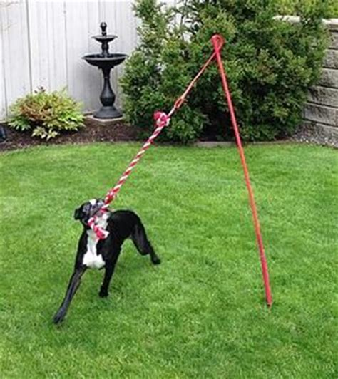 backyard toys for dogs 25 best ideas about dog backyard on pinterest backyards