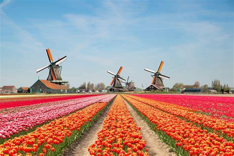 dutch tourist board  stop promoting  netherlands