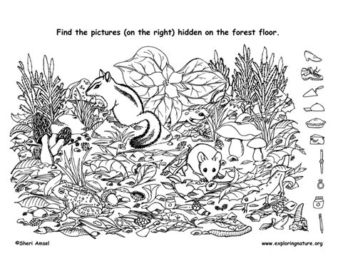 printable hidden object pictures for adults find the hidden things on the forest floor and then color