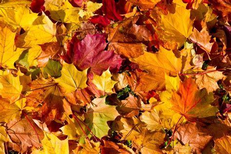 Natur By Lapai margi rudens lapai â ne tik graå u bet ir naudinga