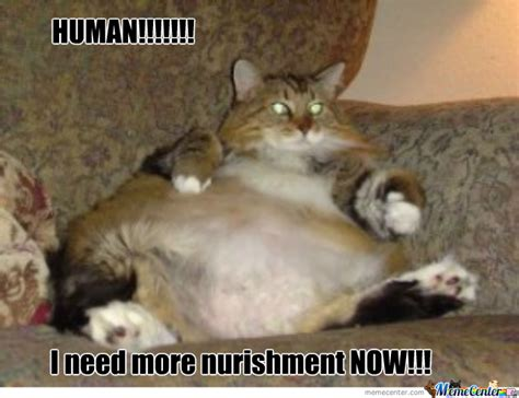Fat Cat Meme - fat cat memes image memes at relatably com