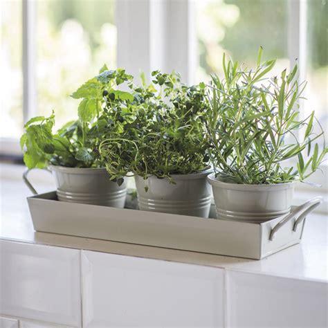 garden trading set   herb pots  tray clay