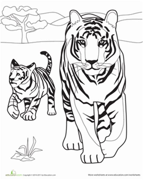 tiger family coloring page tiger family worksheet education com