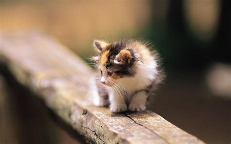 cat wallpaper facebook kittens images pretty kittens in yard wallpaper photos