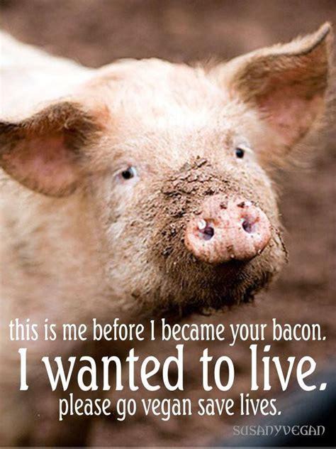 images  vegan memes  pinterest