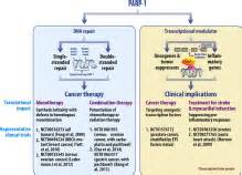 management strategies for cln2 disease sciencedirect chromatin to clinic the molecular rationale for parp1