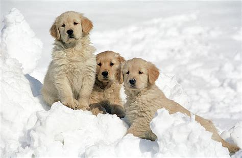 puppies in snow puppies in snow teh