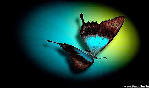 colorful butterfly wallpaper free download beautiful color butterfly wallpapers hd background