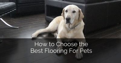 Best Flooring For Pets 8 Awesome Basement Remodeling Ideas Plus A Bonus 8 Home Remodeling Contractors Sebring
