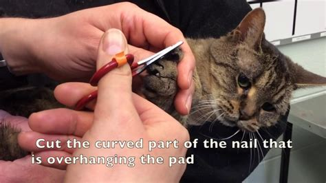 25 Adorable Cutting Cat Nails Kittens Wallpapers