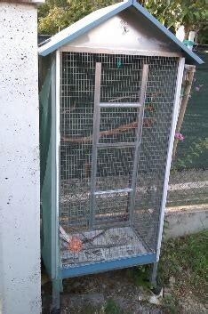 canarini riproduzione in gabbia riproduzione cocorite in gabbia 28 images la