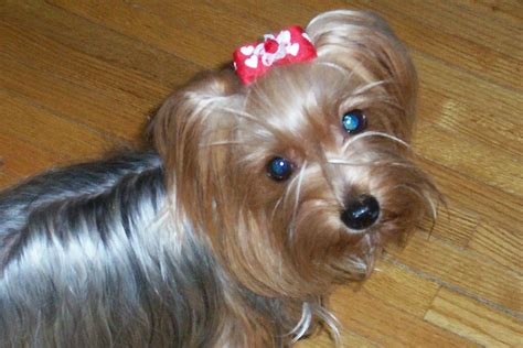 puppy hair bows boutique hair bows for dogs that stay in place
