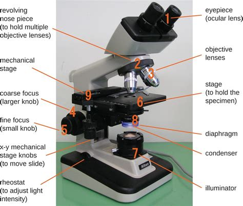 light source microscope function instruments of microscopy microbiology