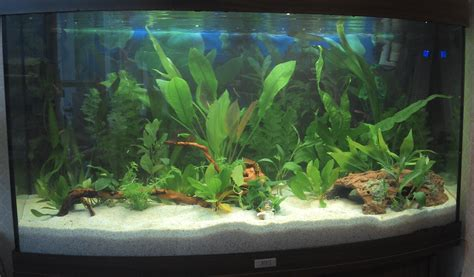 fishkeeping low light low co2 plants and cleaning prior