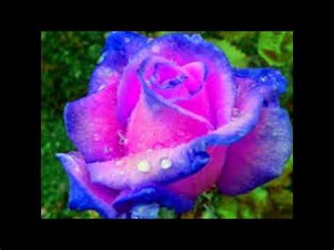 imagenes de flores extrañas y hermosas las flores y rosas mas bonitas youtube