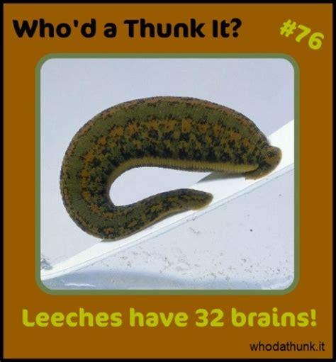 Leech Detox by 83 Best Images About Leeches On Sea Slug