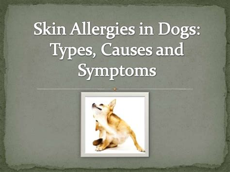 symptoms of allergies in dogs skin allergies in dogs types causes and symptoms