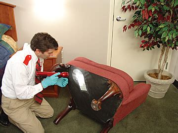 orkin bed bug treatment pictures of bed bugs gallery of bed bug pictures images
