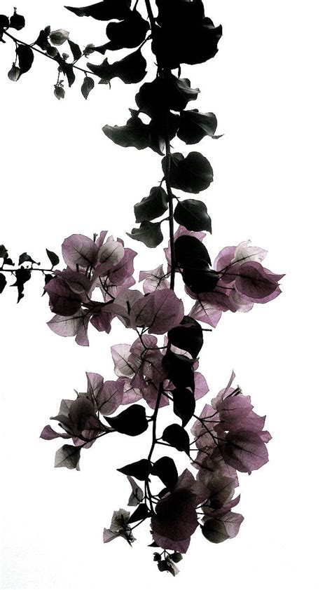 gorgeous xray flowers art phone wallpaper background wallpaper fondo de pantalla
