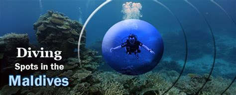 best dive spots best diving spots in the maldives