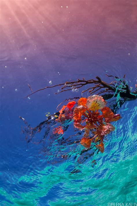 island decor with underwater tints 20 best images about seascape photos on pinterest