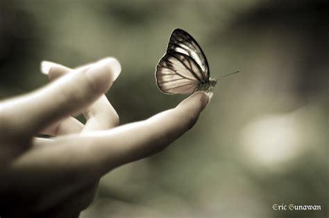 Pengorbanan Seekor Kupu Kupu pelajaran dari seekor kupu kupu jurnal madi