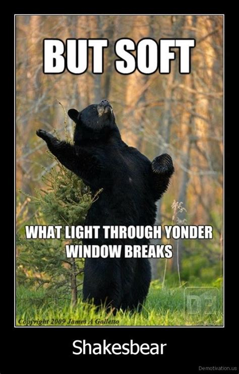 Funny Bear Memes - funny pictures 51 pics
