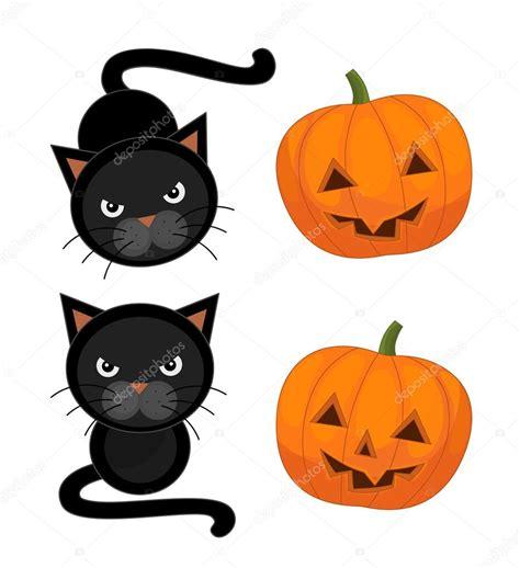 cat and pumpkin cat and pumpkin stock photo