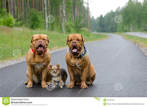 three dogs three dogs sitting on a road stock image image 27204159