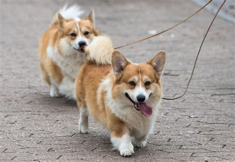 picture of dogs dogs ranked