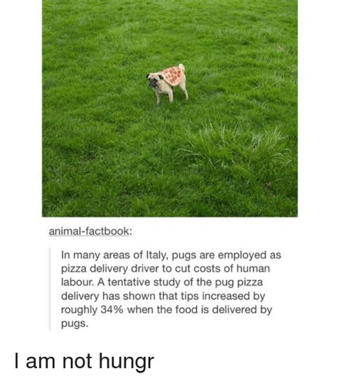 study pug cost 25 best memes about pugs pugs memes