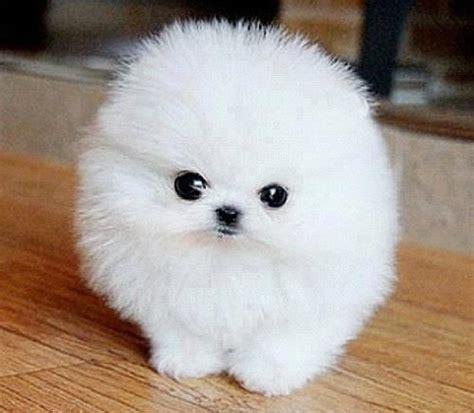 google imagenes tiernas perros tiernos buscar con google animales pinterest