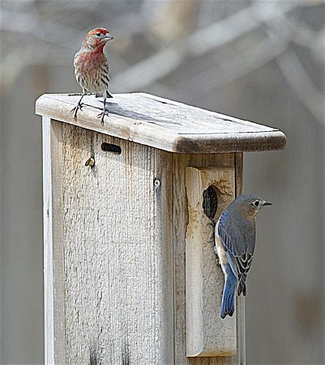 finch houses bird houses finch plans home plan collections
