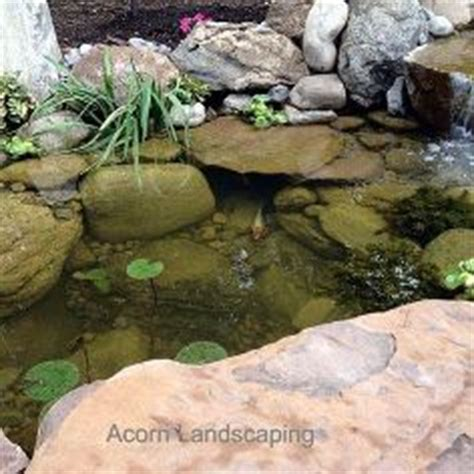 is a backyard pond an ecosystem ecosystem goldfish ponds backyard swim ponds monroe