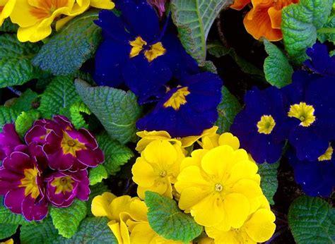 fragrant flowers   gardeners balcony
