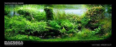 hac 2014 hungarian aquascaping contest result uk