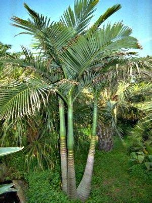 different types of tropical plants trees flowers looking to grow palm trees to make your home more of a