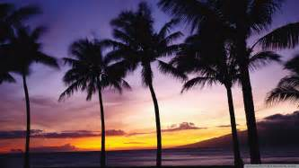 Palm Tree Wallpaper by Download Palm Trees Sunset Wallpaper 1920x1080 Wallpoper