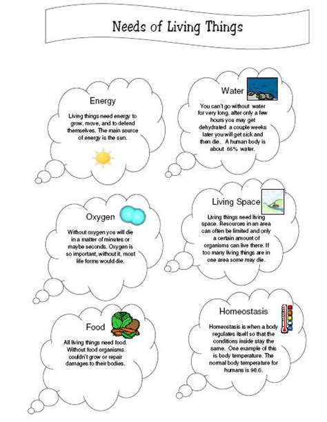 Characteristics Of Living Things Worksheet by Needs Of Living Things Worksheet Karibunicollies