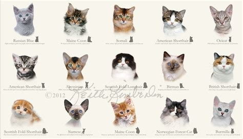 Types Of Haired Cats by View Site
