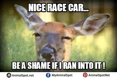 deer memes deer memes