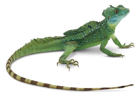 lizard images the meaning and symbolism of the word lizard