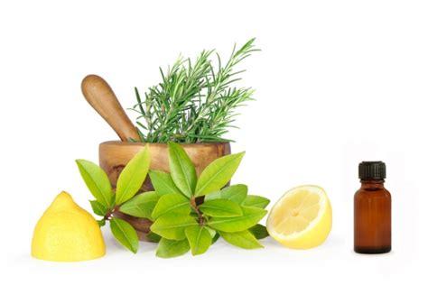 plantas medicinales remedios caseros medicina natural c 243 mo preparar remedios naturales buena salud
