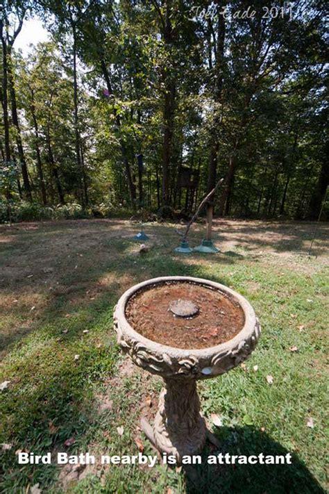 backyard bird photography backyard bird photography setup tips