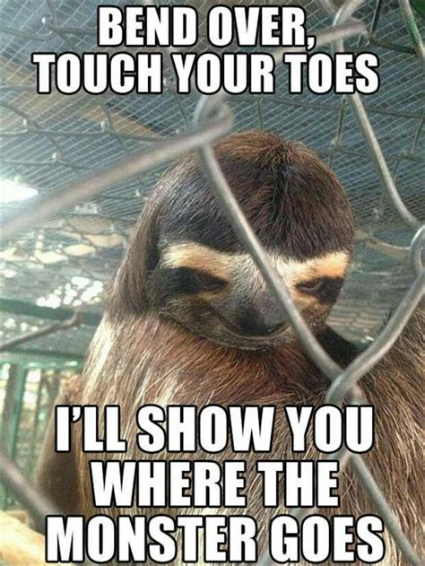 creepy sloth funny as hell pinterest