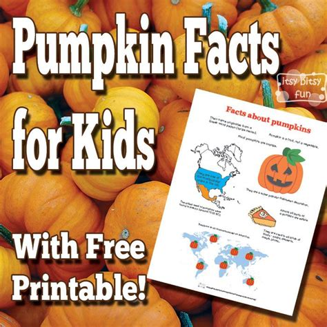 pumpkin facts 17 best ideas about pumpkin facts on